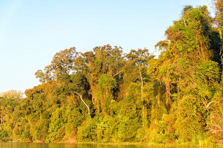 río amazonas: Follaje de la selva amazónica bañado en luz dorada al atardecer en el Parque Nacional Madidi en Bolivia