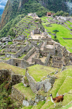 Vertical view of a llama with the Incan ruins of Machu Picchu in the background photo