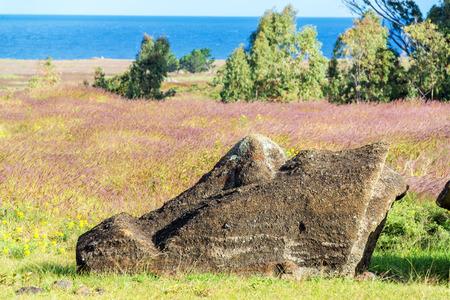 rano raraku: Large head of a broken Moai statue on Easter Island