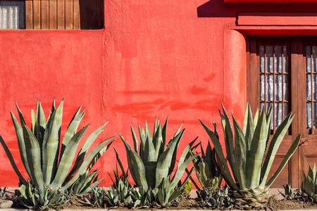 agave: Pared roja vieja con una hilera de plantas de agave en Vicuña, Chile