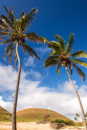 rano raraku: Palm trees with Moai statues on the beach at Anakena on Easter Island