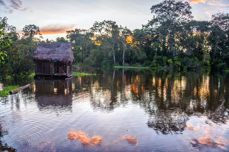 View of the Amazon Rainforest at sunset near Iquitos, Peru