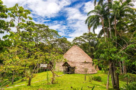 amazonas: Traditional indigenous dwelling known as a Maloka in the Amazon Rainforest in Brazil