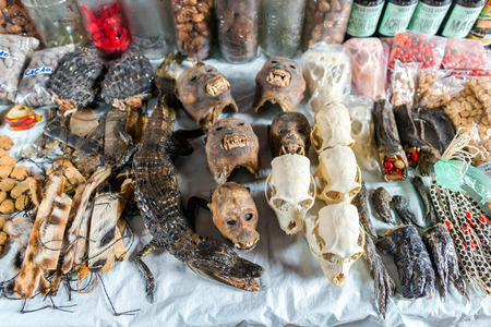IQUITOS, PERU - MARCH 17: Animal skulls for sale in Belen Market in Iquitos, Peru on March 17, 2015
