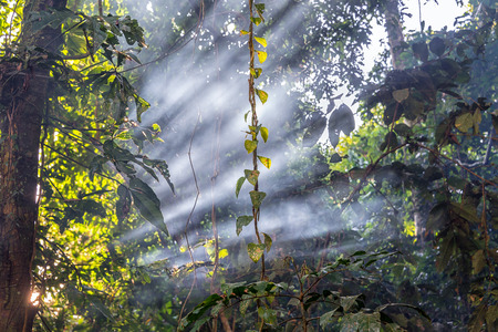Beams of like passing through smoke in the Amazon Rainforest near Iquitos, Peru