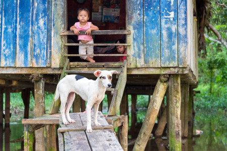 poor children: SANTA RITA, PERU - MARCH 21: Dog guarding the entrance to a house in the village of Santa Rita, Peru on March 21, 2015.  Santa Rita is a community deep inside the Amazon Rainforest. Editorial