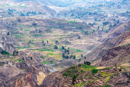 deepest: Terraces dating back to Inca times inside Colca Canyon in Peru Stock Photo