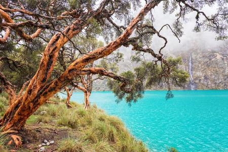 ancash: Blue lake and quenua tree in the Cordillera Blanca near Huaraz Peru