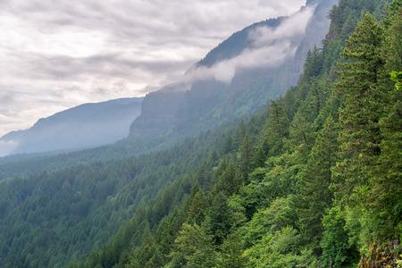 Verde bosque denso subir las laderas de la garganta del río Columbia en Oregon