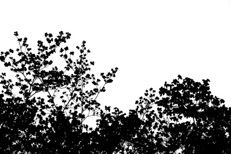 black cherry: Black and white cutout of cherry blossoms