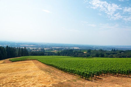 valley below: View of a vineyard with the Willamette Valley below in Oregon wine country