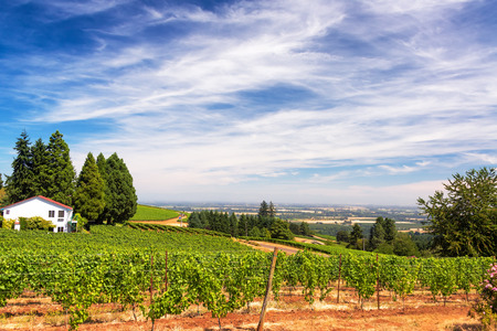 dundee: Vineyards in the Dundee Hills in Oregon with a beautiful dramatic sky Stock Photo