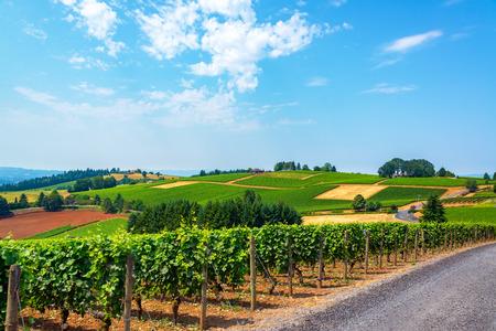 오리건 와인 나라에서 던디 언덕에 포도밭으로 덮여 언덕