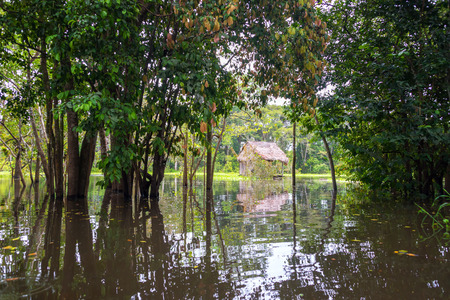 peru amazon: View of a floating shack in the Amazon as seen through a grove of trees near Iquitos, Peru