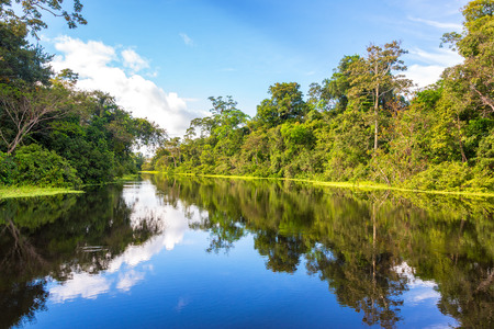 Amazon rain forest perfectly reflected in a small river near Iquitos, Peru 스톡 콘텐츠