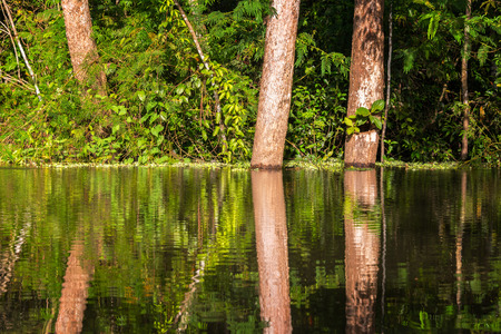 amazon forest: View of trees reflected in the Yanayacu River in the Amazon rain forest near Iquitos, Peru