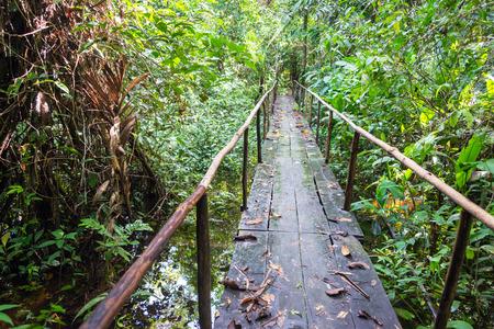 Wooden bridge passing over a small creek in the Amazon jungle near Iquitos, Peru Stock Photo