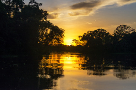 peru amazon: Sunset in the Amazon rain forest near Iquitos, Peru