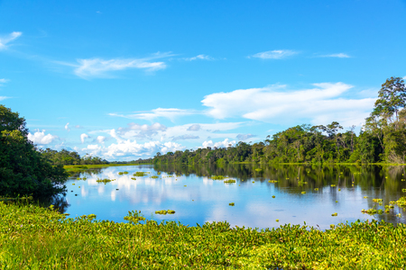 amazon forest: View of a river in the Amazon rain forest with aquatic plants in the foreground near Iquitos, Peru