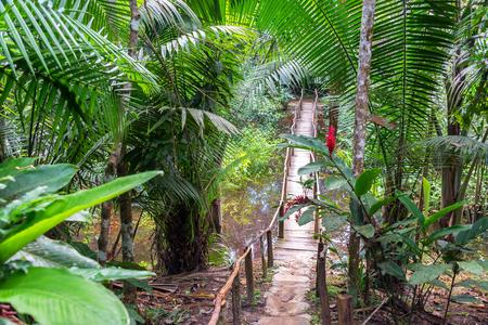 río amazonas: Pequeño puente de madera en un exuberante selva verde cerca de Iquitos, Perú