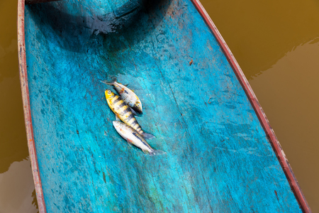 amazon rain forest: Three fish in a colorful blue canoe in the Amazon rain forest in Brazil Stock Photo