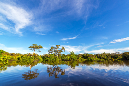 amazon rain forest: Trees and sky being reflected in the Javari river in the Amazon rain forest