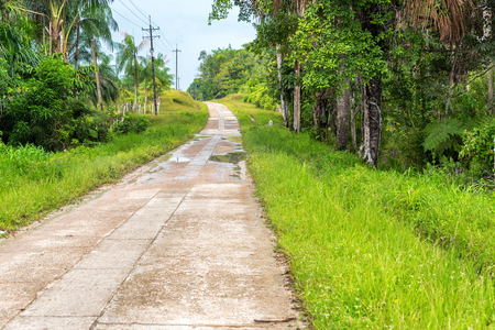 amazon rain forest: Highway running through the Amazon rain forest near Leticia, Colombia