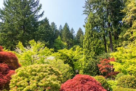Trees in a Japanese Garden in Portland, Oregon