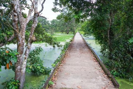 amazon rain forest: Concrete path through the Amazon rain forest in Puerto Narino, Colombia Stock Photo
