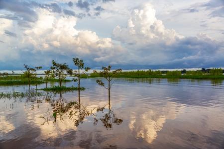 río amazonas: Cielo y los árboles reflejan en el río Amazonas en la tarde cerca de Leticia, Colombia