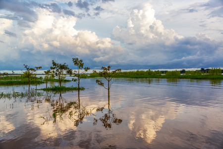 amazon river: Sky and trees reflected in the Amazon River in the late afternoon near Leticia, Colombia