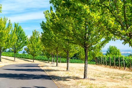 dundee: Tree lined road among vineyards near Dundee, Oregon Stock Photo