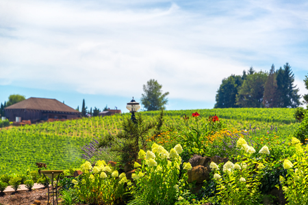 wine country: Flowers in Oregon wine country near Dundee Stock Photo