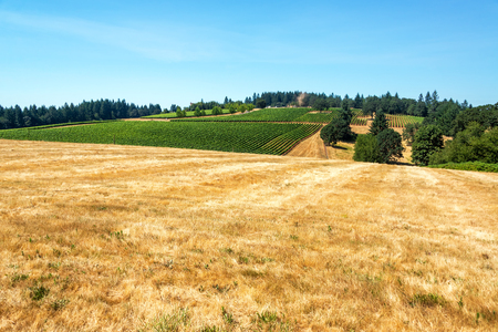 dundee: Dry field with vineyard in the background near Dundee, Oregon