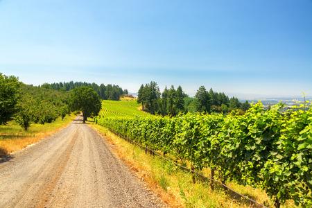 dundee: Gravel road passing vineyards near Dundee, Oregon Stock Photo