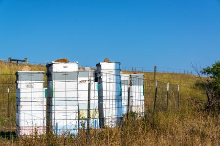 Bee hives in a bee yard, or apiary, near Sheridan, Wyoming Stock Photo