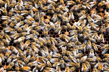 Closeup of a swarm of bees as seen in Buffalo, Wyoming