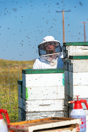 apiarist: SHERIDAN, WY - AUGUST 25: Beekeeper working with beehives near Sheridan, WY on August 25, 2015