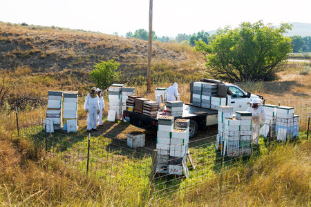 SHERIDAN, WY - AUGUST 25: View of a bee yard near Sheridan, WY on August 25, 2015