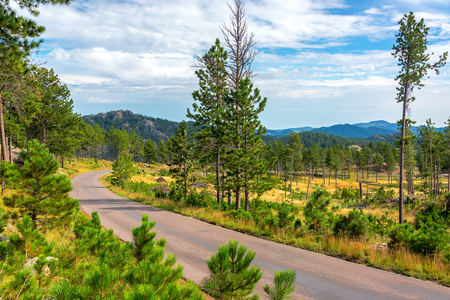 black forest: Beautiful scenic road passing through Custer State Park Stock Photo