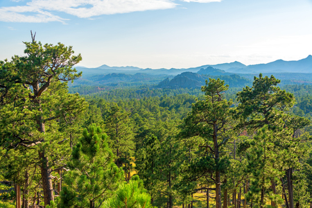 forested: Forested landscape in Custer State Park in South Dakota