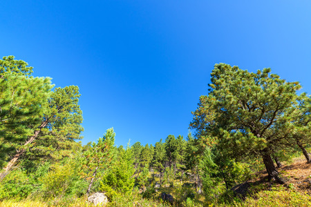 pine creek: Lush green forest in South Piney Canyon near Story, Wyoming