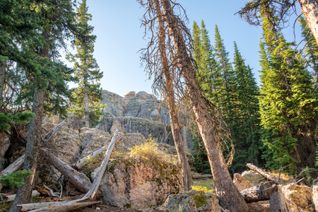 lookout: Forest with large boulders at High Park Lookout in Wyoming