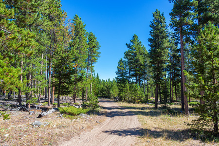 though: Dirt road running though Bighorn National Forest near Buffalo, Wyoming Stock Photo