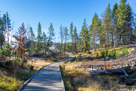 Boardwalk in the Mud Volcano Area in Yellowstone National Park