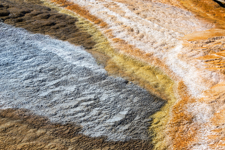 carbonate: Bacteria mat in Mammoth Hot Springs in Yellowstone National Park Stock Photo