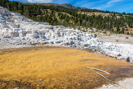 mammoth: Terraces at Mammoth Hot Springs in Yellowstone National Park Stock Photo