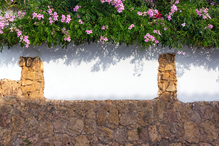 pink flowers: Lush foliage and pink flowers growing on a colonial wall in historic Villa de Leyva, Colombia