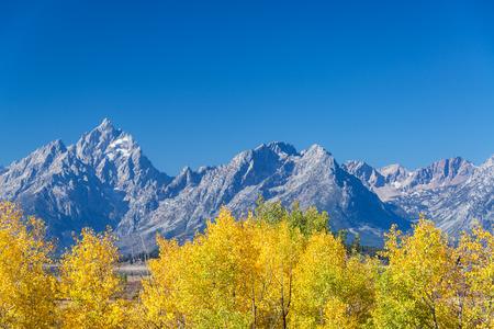 teton: Yellow Aspen trees in the fall with the Teton Range in Grand Teton National Park Stock Photo