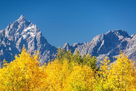 Aspen trees and Teton Range in Grand Teton National Park in the fall